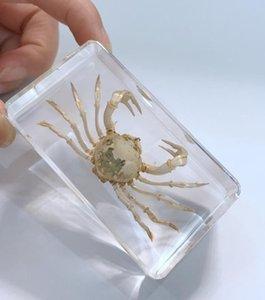 LIVRAISON GRATUITE yqtdmy crabe des mains dans l'éducation Effacer bloc Mode spécimen