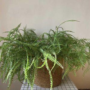 Artificial Row Fern Leaves Green Plants Fake Lifelike Plastic Persian Grass Lysimachia Fern Home Wedding Floral Decoration