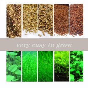 SunGrow 수족관 잔디 씨앗 수족관 카펫 공장 물 식물 씨앗 수생 물 잔디 식물 장식 DIY의 홈 정원 쉬운 성장