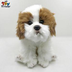 Peluche pekinés caniche perro de juguete Triver Stuffed Animal Doll Puppy Pet Kids Baby regalo de cumpleaños regalo de la tienda en casa decoración artesanía