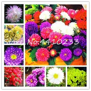 500 pezzi misto Aster Bonsai Flower Plant Seeds, Bonsai Rainbow Chrysanthemum Bonsai Perenne Flowers per la pianta da giardino domestica facile da crescere