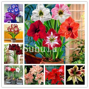حار amaryllis بونساي 200 قطع الصينية الرخيصة الملونة زهرة بونساي النباتات هيبيستروم زهرة بذور النباتات النباتات حديقة شرفة سهلة تنمو