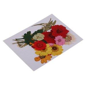 1 set naturale Pressed Fiori Rosa / margherita / Larkspur / Myosotis secchi fiori pressati della decorazione di DIY della cassa del telefono