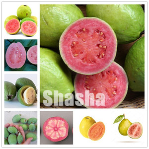 100 Pcs Bag Guava Bonsai seeds Delicious Tropical Fruit Bonsai Non Transgenic Plants Bonsai Fruit Tree For Home Garden Plant