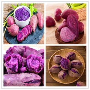 New graines arrivel fleurs de plantes de Noël cadeau Potted, 500 Pcs pourpre de patates douces Bonsai de pommes de terre délicieux