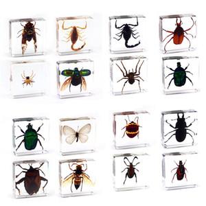 papillon Araignée Scorpion insectes spécimen en clair résine Paperweight spécimen