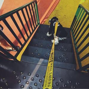 Off White Coleira de cão trelas Peito Voltar Moda Teddy Schnauzer ajustável Collar Strap Vest Pet trelas cão Harnesses Suprimentos DA11