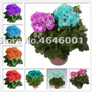 200 Pcs bag Seeds Bonsai Geranium Potted Flower Perennial Flower Plants Pelargonium Peltatum Bonsai Indoor Rooms Plant Pot Bonsai