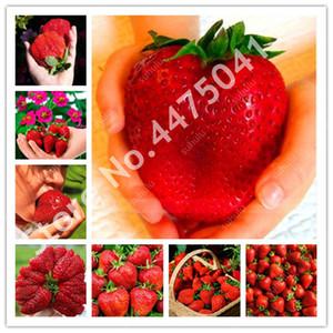 Verkauf! 2000 PC Riesen-Erdbeere flores Seeds Super große und Bule Strawberry Fruit plantas köstlich Bio Bonsai Geschenk für Garten