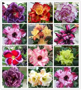 Luminoso Viola Adenium Desert Rose Bonsai Fiore piante Semi, 20 pc Indoor Plants protezione dalle radiazioni Bonsai planta giardino domestico di DIY