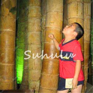 50 semillas de las PC Gaint bambú Moso Bonsai, bambú, fácil de cultivar gigante Phyllostachys pubescens Planta de bambú, al aire libre de plantas para jardín