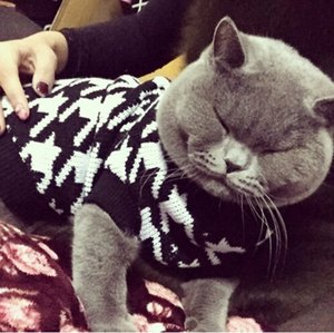 Classic Houndstooth Sweater For Small Cat Sweater Pet Jumper Coat Puppy Cat Clothes Ragdoll Canadian Hairless British Shorthair