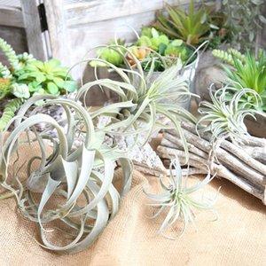 Parede da planta 1Pcs 34CM Bromélia flor artificial Air Grama Home Decor Wedding Flower Segurar Acessórios Artesanato Falso