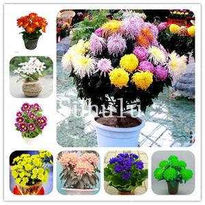 500 шт. / Сумка Rainbow Daisy Флорес Семена, экзотические многолетние хризантемы Plantas, цветок бонсай, красивые горшечные растения для дома
