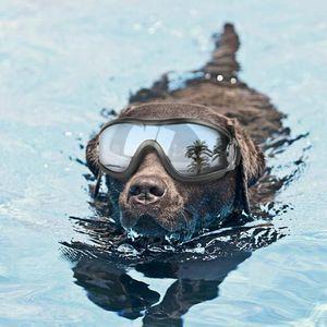 1pc heißen Verkaufs-Haustier Hund Glas-Augen-wear Hund Pet Sonnenbrille Fotos Props Zubehör Tierbedarf Katzen Brillen