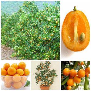 Promotion ! 100pcs Balcon Patio Arbres fruitiers Kumquat Bonsai Orange Garden Flores Tangerine nain Citrus Juicy Fruit Orange Tree