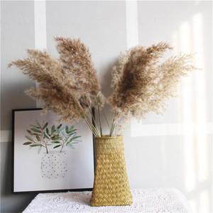 Reale piante essiccate fiore di cerimonia nuziale Erba di pampa Decor Mazzo naturali Decor decorazione domestica 10pcs 20pcs 30pcs