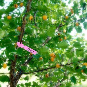 Garden Labels Plant Nursery Tag Plastic Identification Card Seedling Nursery Gardening Family Signs Mark Gadget 20 Pcs