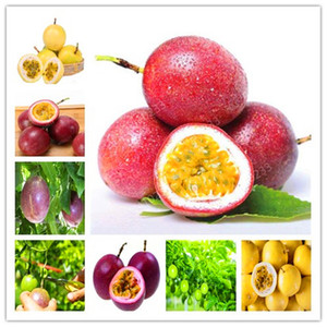 100 Pcs Paspy Fruit seeds Bonsai (Passiflora Incarnata), Diy Potted Plant, Tropical Flower Diy Plant For Home Garden Bonsai Fruit