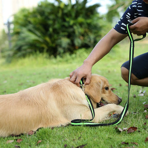 Yeni Moda Ayarlanabilir Köpek Yavru Kedi Pet Yaka Emniyet Naylon kolye Toka Yaka