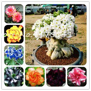 Sıcak Satış Bonsai Adenium obesum bitki Balkon Çiçek bitkiler tohumları 10 Adet Gökkuşağı Desert Rose Bonsai Home For Bahçe Kolay Grow