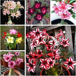 100% True Desert Rose Bonsai Plantas ornamentales Balcón Bonsai Flores en maceta Drawf Adenium Obesum Bonsai -2 Partículas / lote Decoración del hogar