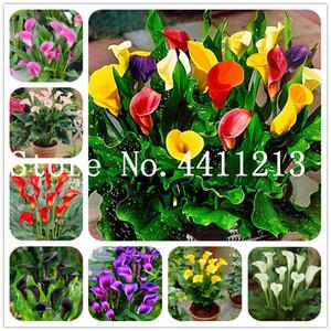 Elegantes semillas de la planta noble flor Bonsai 100pcs multicolor de la flor de la cala La verdadera flor de la cala simbolizan el amor de Plantas de interior Bonsai Balcón