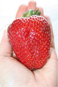 Nouvelle arrivee ! 1000 Pièces Gaint rouge graines fraises Flores Berry Organic Fruit Plantas Légumes non Ogm Bonsai Pot pour jardin