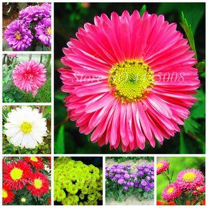 200 pc / sacchetto semi Cina Madre Crisantemo Aster pianta rara perenne fiore bonsai Planta interne in vaso fiorite Piante Family Garden