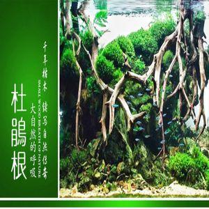 천연 나무 줄기 유목 수족관 물고기 탱크 장식 파충류 실린더 뿌리를 만드는 공장 목재 장식 (Ramdon 모양) 기타 수족관