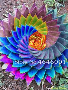 La venta caliente! 400 pcs Semillas Lithops Raras bonsai color del jardín de Aloe, en macetas plantas perennes suculentas Cactus Flores Planta absorber la radiación