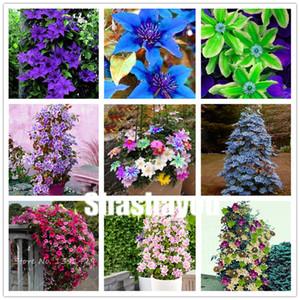 500 pezzi arrampicata clematis semi bonsai rari clematis hybridas fiori appesi fiori in vaso balcone piante di fioritura piante per la casa giardino