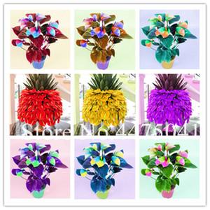 أفضل بيع 200 قطع النباتات زهرة أنثوريوم Andraeanu بونساي بذور النباتات بلكونة مزروع اليدويه مصنع ملون أنثوريوم بونساي للمنزل حديقة