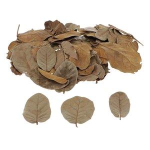 Surtido de hojas de otoño de arce arte Para Gracias dador, bodas, eventos, Decoración