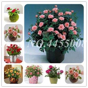 Vente 200 pcs Graines Rose Bonsai vivace Rose Fleurs d'intérieur Bonsai Fleur Rose Arbre Fragrant Plantes grimpantes pour jardin Plantation