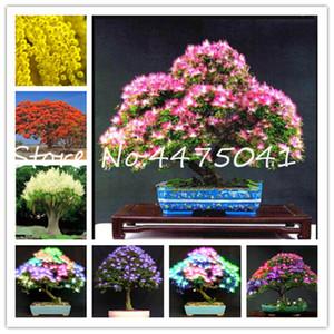 2020 nuovi 50 pc dell'arcobaleno Albizzia Acacia bonsai del fiore semi di piante, piante da balcone coperto Albero Outdoor Albizzia fiori in vaso Per la casa Giardino