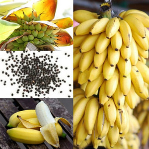 1set / 100pcs Rare Bananier nain en vrac Graines Mini Bonsai Fruits tropicaux Plantes en pot