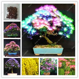 Bonsai 50 pz Arcobaleno Albizzia Acacia Fiore All'aperto Bonsai Albero Albizzzia organico fioritura fiore pianta in vaso giardino di casa semi di piante