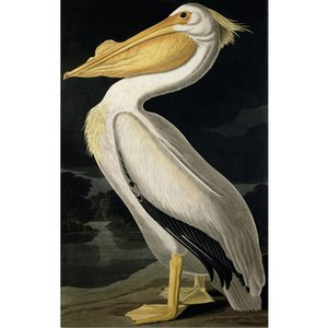 Canvas wall art American White Pelican by John James Audubon oil paintings hand painted bird picture for living room Gift