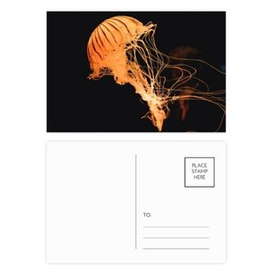 Ocean Jellyfish Science Nature Picture Postcard Set Birthday Thanks Card Mailing Side 20pcs