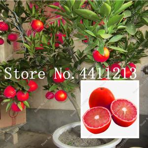 20Pcs Kırmızı Limon Ağacı Ayrıca Kan Portakal Organik Meyve Bonsai bitki tohumları Yüksek Survival Oranı Bonsai Kırmızı Kireç Fabrikası Sağlıklı Gıda Ev Bahçe mı