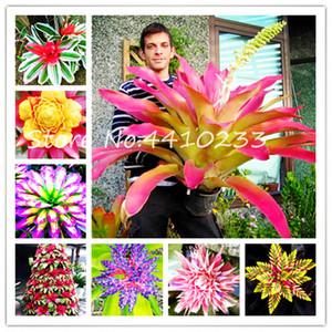 200pcs Sementes Bonsai Colorful Cactus Bromélia Tillandsia bulbosa Air planta fácil cultivo Suculenta Bonsai Para Casa Garden frete grátis