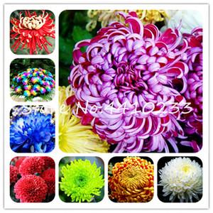 200 pc Cina Madre Bonsai di piante semi Crisantemo Aster fiore pianta perenne fiore Rare Indoor piante bonsai fiore per Family Garden