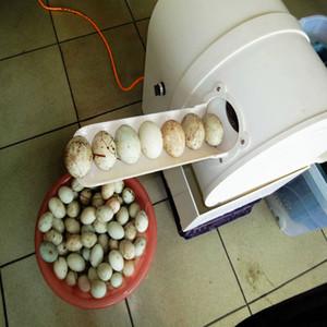 2020 à chaud en acier inoxydable 220 V machine à laver nettoyage oeuf frais automatique commercial / rondelle oeuf de canard sale