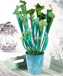 500 piezas Venus mosca trampa Bonsai semillas planta de interior en maceta jardín decoración planta insectívora planta regalo Bonsai