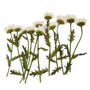 Confezione da 12 steli Real Pressed Flower per inviti di nozze Card Making Floreale FAI DA TE Scrapbook Biglietti d'auguri Candele Decorazione
