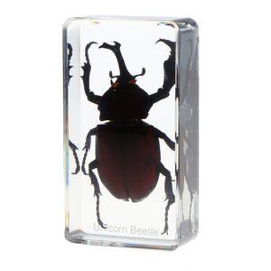 Insekt Specimen Briefbeschwerer Kollektion Geschenk Rhinoceros Andere Spielzeug Käfer Insekt Specimen Briefbeschwerer Sammlung Geschenk Rhinoceros Andere Um die