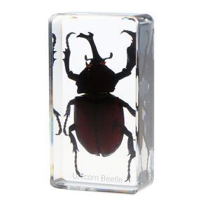 Insekt Probe Briefbeschwerer Sammlung Geschenk - Nashorn beetlechildren Babyspielwaren