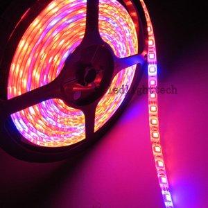 Lámparas Phyto LED de 5M Luz de tira de espectro completo LED 300 LED 5050 Chip LED Fitolampy Grow Lights para plantas de hidroponía de invernadero