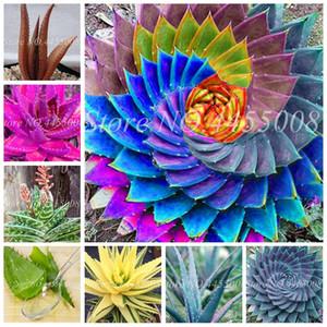 Sale! 200 Pcs Seeds Rainbow Aloe Bonsai Mixed Excellent Succulent Plants Aloe Vera plant Succulentas Rare Flower Home Garden Bonsai